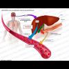 IMGBIN_diabetes-mellitus-type-2-type-1-diabetes-insulin-acromegaly-png_kbWb7Cfn